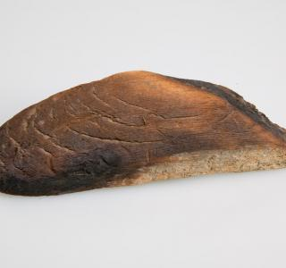 Wood Fragment from O'Leary Barn (ichi-64489)